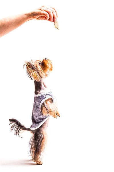 Productos para mascotas en la cooperativa agrícola de Petrer