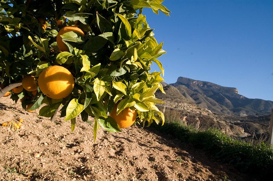 La-agricultura-el-corazon-de-la-coope