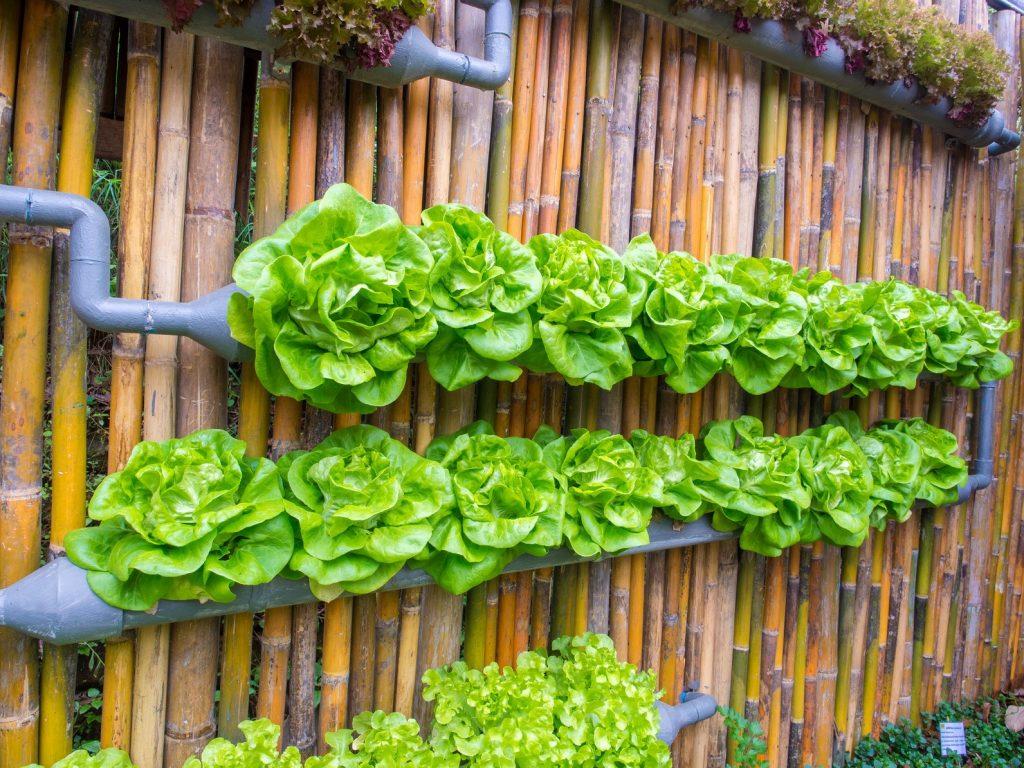 nuevas formas de agricultura